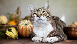 How To Have A Happy & Safe Thanksgiving With Your Cat