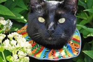 Brightly Colored Court Jester Style Collars For Cats Help Save Lives