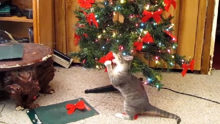 10 cats that love christmas trees videos cattime Christmas tree cat tower