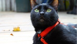 Kitty Convict Project Suggests Orange Collars To Help Lost Cats Get Found