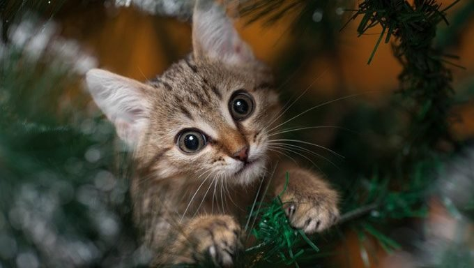 kitten sitting in christmas tree