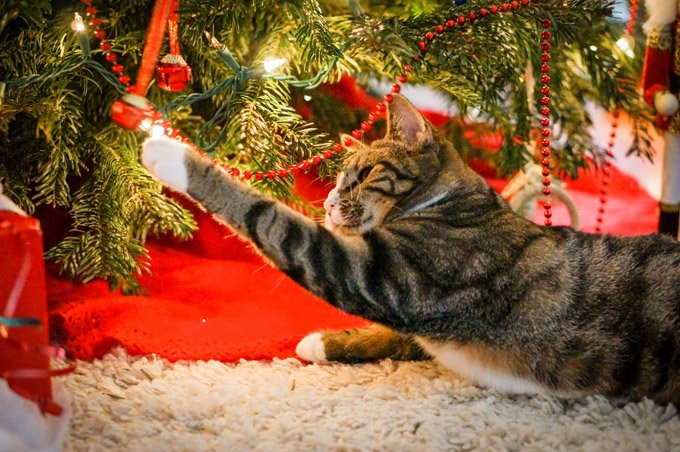 cat-proof-christmas-tree-3