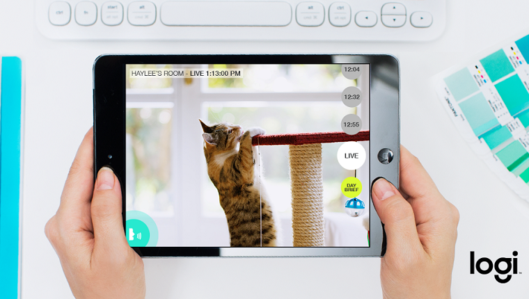 A pair of hands holds a tablet with an image of a cat climbing a scratching post.