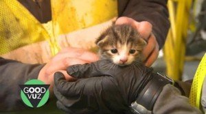 Kitten Pulled From Recycling Center Conveyor Belt At The Last Moment