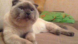 A Town In Siberia Wants To Elect A Cat As Mayor