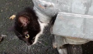 Kitten Stuck In Bizarre And Life Threatening Predicament Is Rescued