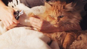 Why It Is NEVER Okay To Declaw A Cat