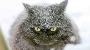 Keeping Your Cat Safe During A Blizzard