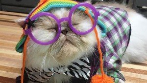 14 Kitties Dressed Up For Dress Up Your Pets Day