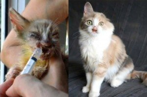 Horribly Disfigured Kitten Is Saved By The Love Of A Young Girl [GRAPHIC]