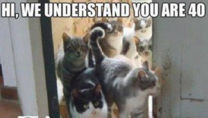 25 Funny Cat Memes To Make You Laugh