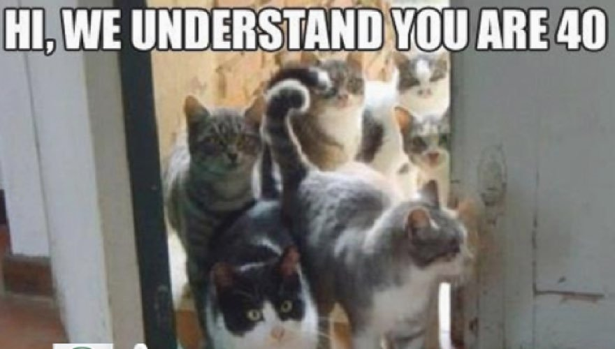 25 funny cat memes to make you laugh cattime
