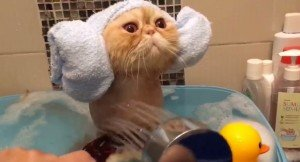 Adorable Cat Gets A Bath [VIDEO]