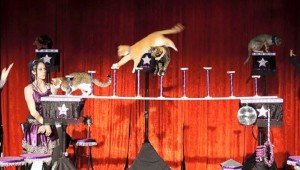 Meet The Amazing Acro-Cats!