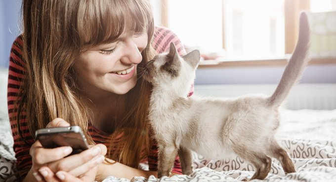 Cat Dandruff: What You Need To Know