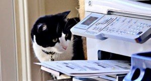 Cats VS Printers: 10 Cats Attacking Printers