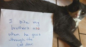 20 Funny Pictures Of Guilty Kitties Confessing Their Crimes