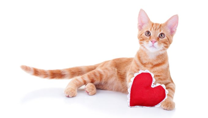 cat with a heart for valentine's day