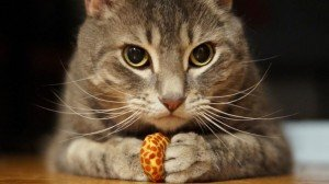 Respect Your Cat Day: How To Show Your Cat Respect