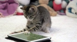 Cats Playing On An iPad (And Why They Should)