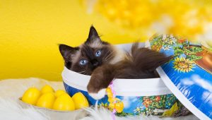 25 Cats And Kittens Who Are Ready For Easter [PICTURES]