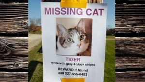 7 Things To Do If Your Cat Is Lost Or Missing