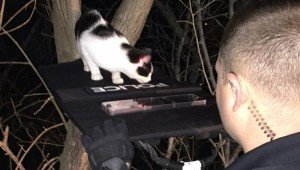 Officers Use Taser And Bulletproof Shield To Rescue Cat From A Tree