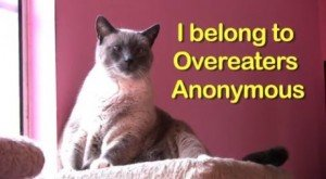 Shameless Cat Confessions [VIDEO]