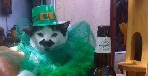 St. Patrick's Day: 30 Cats Who Have The Luck Of The Irish