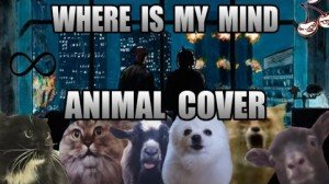 Animals Cover Song – Where Is My Mind By The Pixies