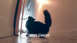Cat Jobs: Some Jobs Are Made For Cats [VIDEO]