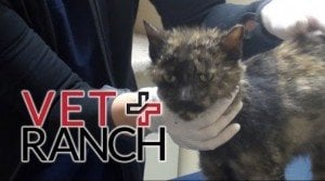 Lovable Cat Saved From Euthanization Thanks To Vet Ranch [VIDEO]
