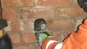 Firefighters Save Cat Stuck Behind Bricks Of Chimney
