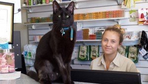 Cross-Eyed Cat Finds Forever Home At The Vet Clinic Where He Was Abandoned