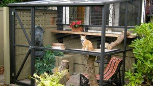 "Company Makes ""Catios,"" Outdoor Patios For Cats!"