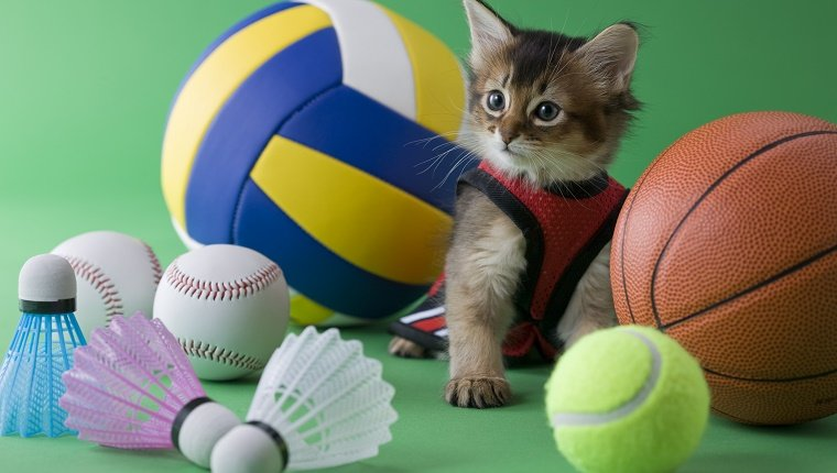 Cat with sporting equipment