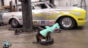 Kitty Shark Cleans The Garage [VIDEO]