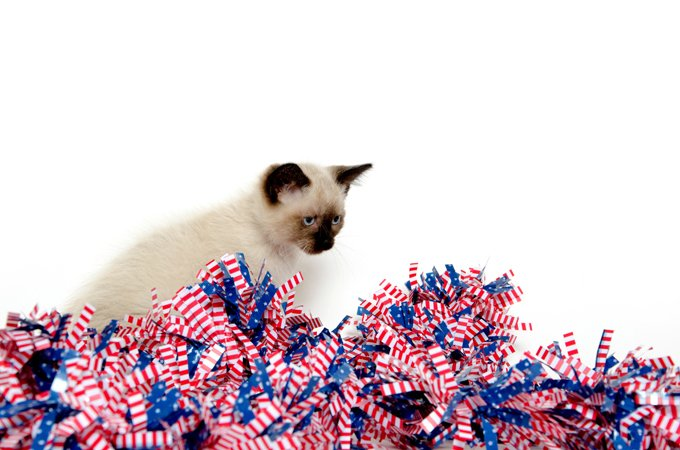 Cute baby cat sitting with Fourth of July decorations on white background