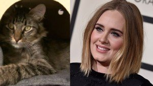 Adele Visits Vancouver Cat Café And Makes One Kitty A Local Celebrity