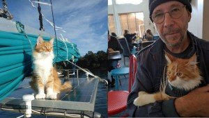Deaf Sailor's Maine Coon Cat Acts As His Ears Out At Sea