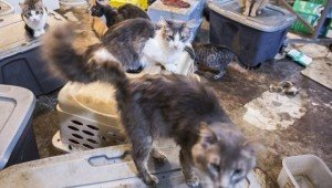 Over 100 Cats Saved From Home Of Animal Hoarder, And You Can Help!