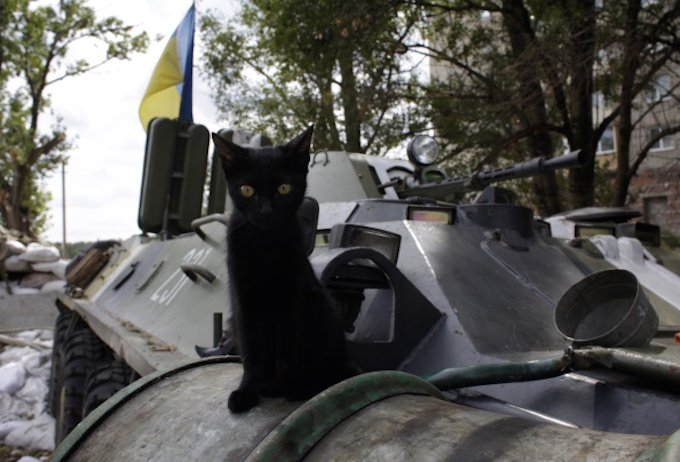 A kitten sits on an APC at the checkpoint of Ukrainian troops in Avdeyivka, Donetsk region on August 19, 2014. Ukraine's military said today that fighting had erupted in the heart of the major rebel stronghold of Lugansk as government forces pressed on with a punishing offensive to win back the war-torn east. AFP PHOTO/ ANATOLII STEPANOV (Photo credit should read ANATOLII STEPANOV/AFP/Getty Images)