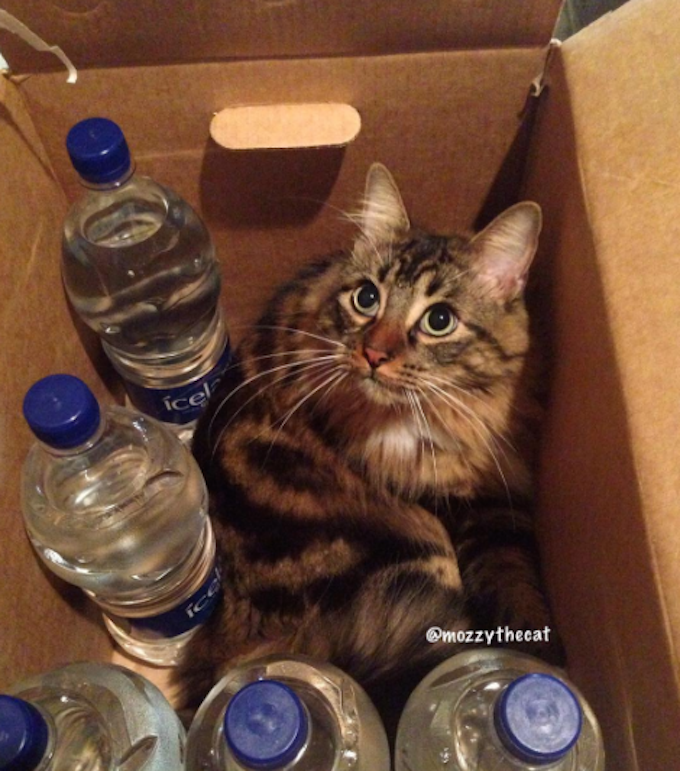 CardboardWaterBottles  FUNNY: Cardboard Boxes For Cats, Ranked CardboardWaterBottles