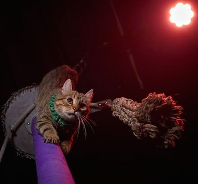 Circus-Cat-Labor-Day-AcroCats