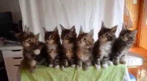 Synchronized Kittens Should Be In the Olympic Games [VIDEO]