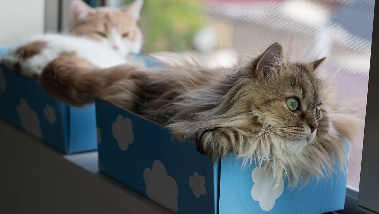 Pair of cats in blue and white boxes on windowsil