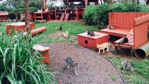 Hawaii's Free Range Cat Sanctuary Is A Cat Lover's Heaven On Earth