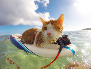 10 Thrill-Seeking Adventure Cats