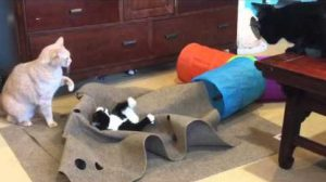 10 Amazing Cat Toys Your Kitty Must Have Right Now