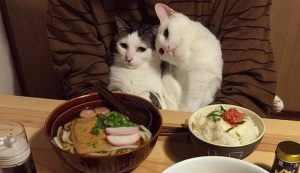 2 Adorable Cats Love Watching Their Humans Eat [GALLERY]